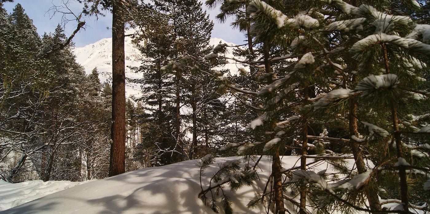 Чегетский лес