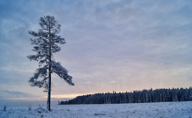 Снежное одиночество