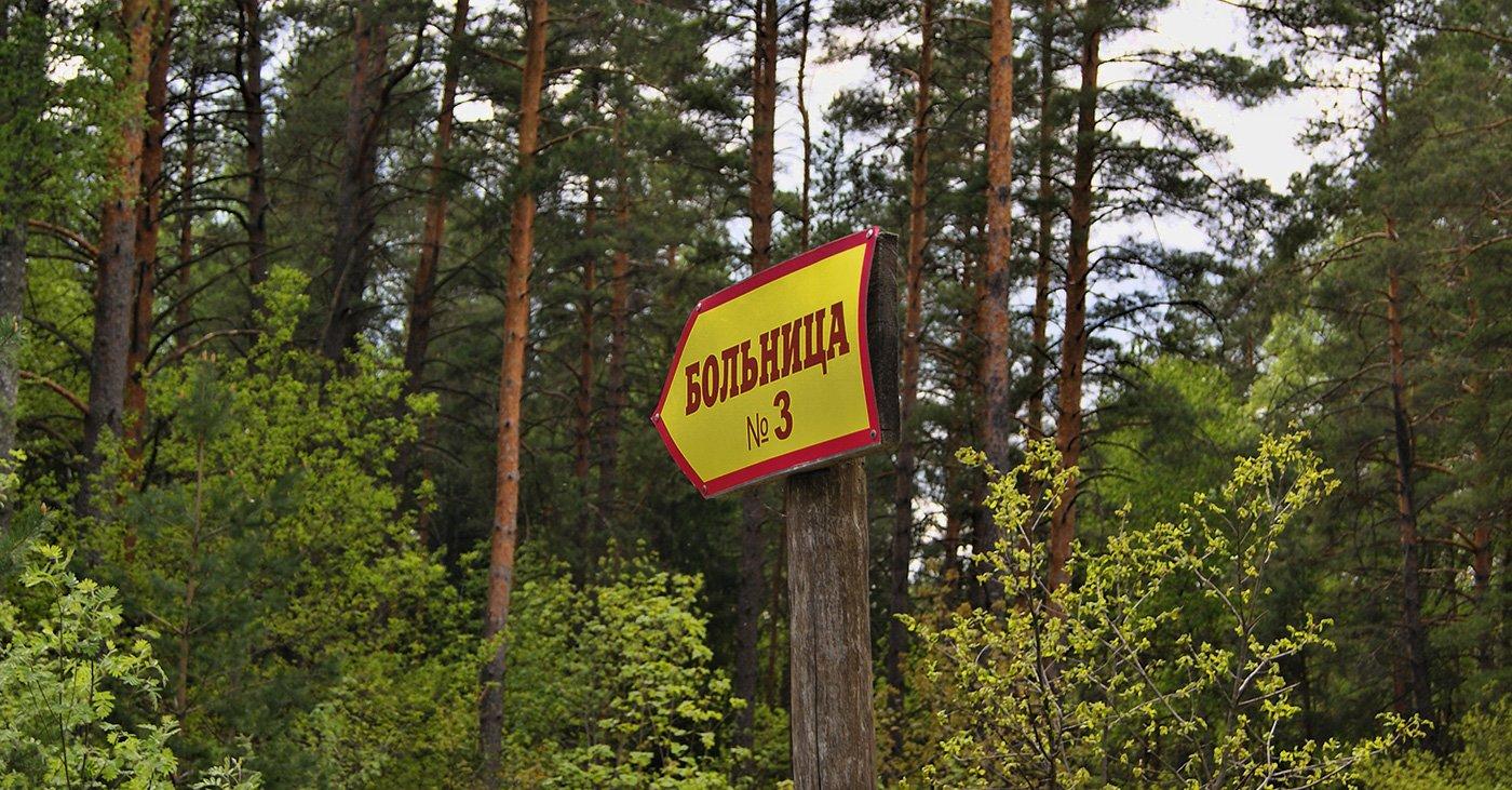 веселенькая табличка указывает на грунтовку, уходящую в мрачный еловый лес