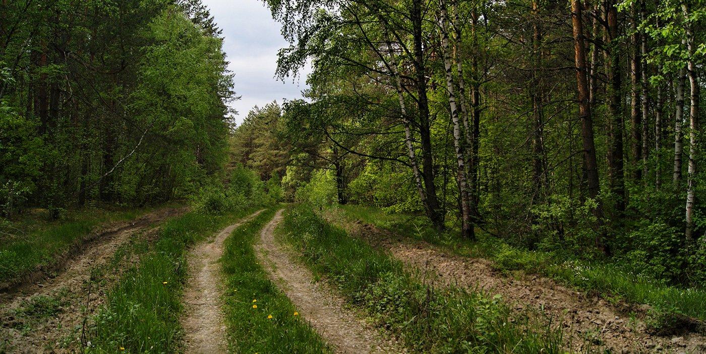 ... очень красивая дорога ведет ...