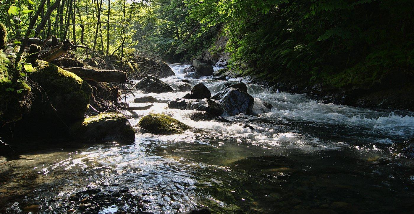 река Дзыхва