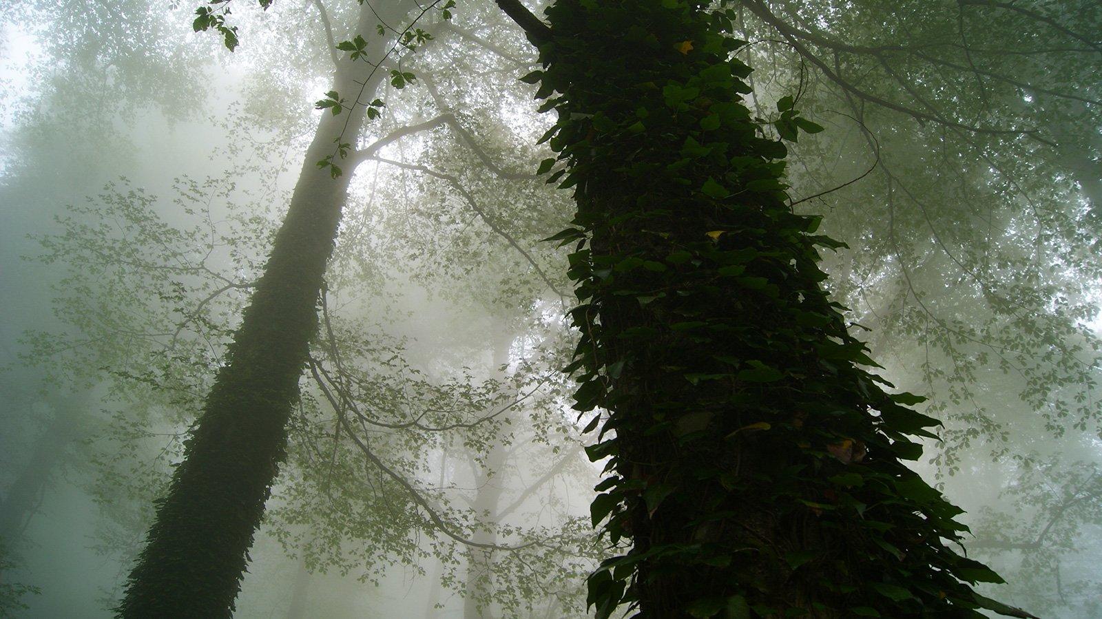 """Буковый лес на склонах """"Рыбной балки"""""""