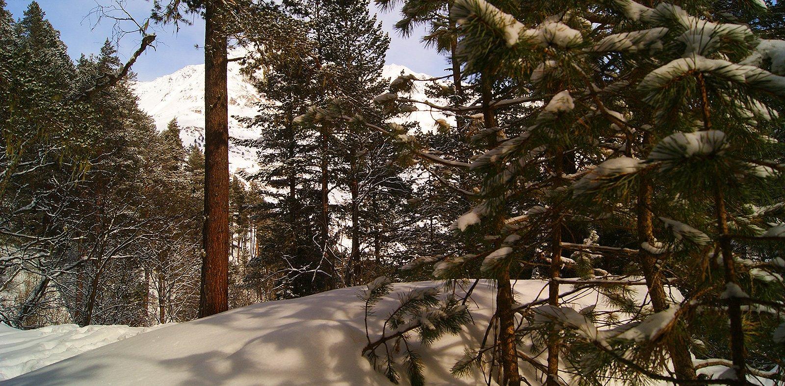 Лес на Чегете