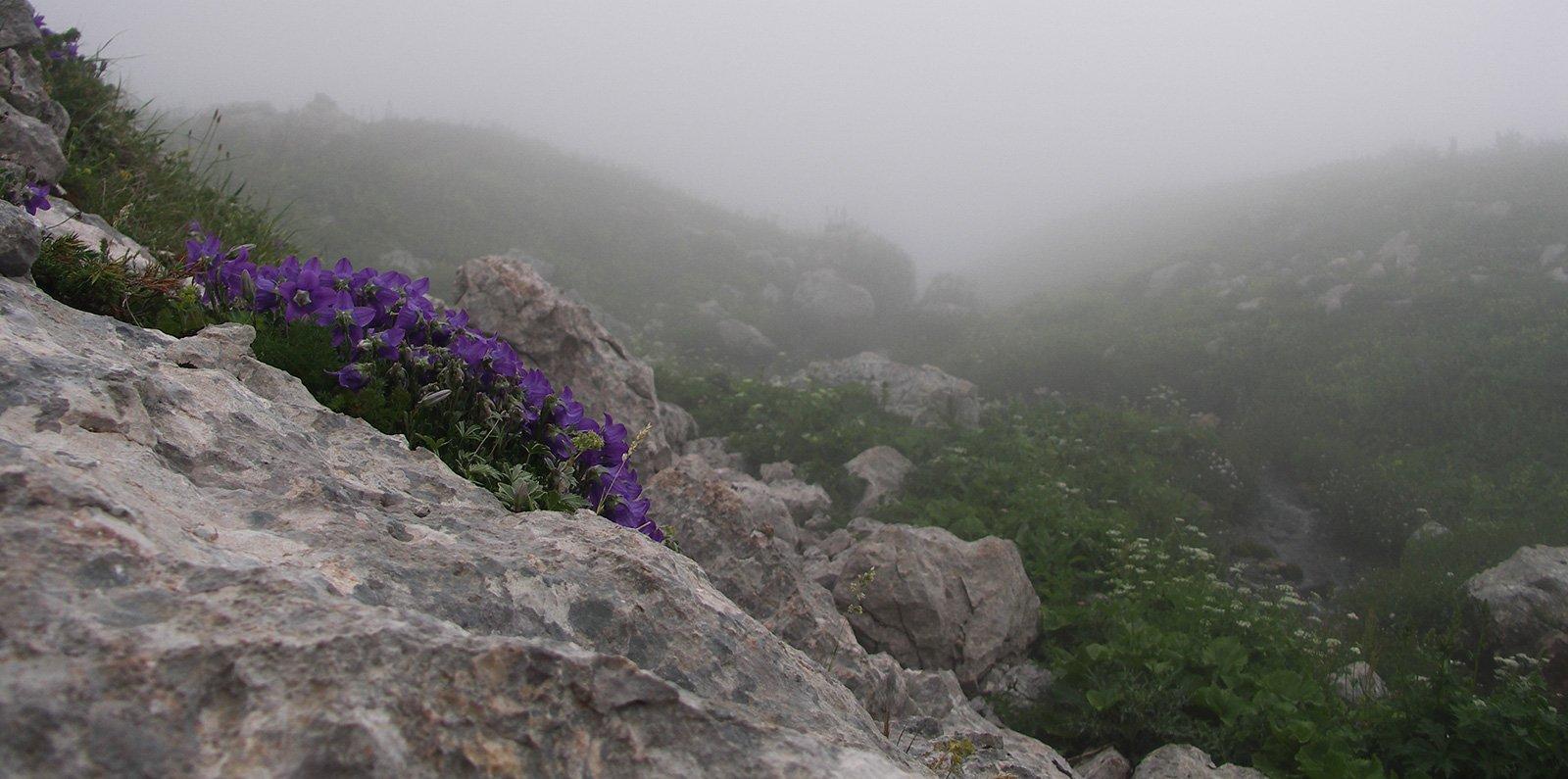 <s>Ежик</s> фиалки в тумане
