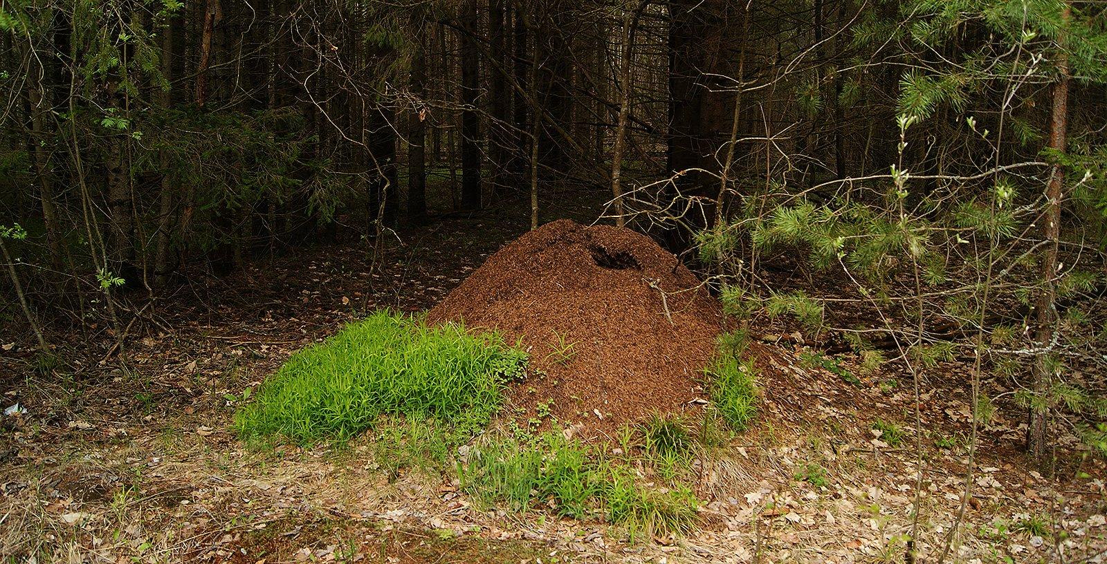 муравьиный ландшафтный дизайн