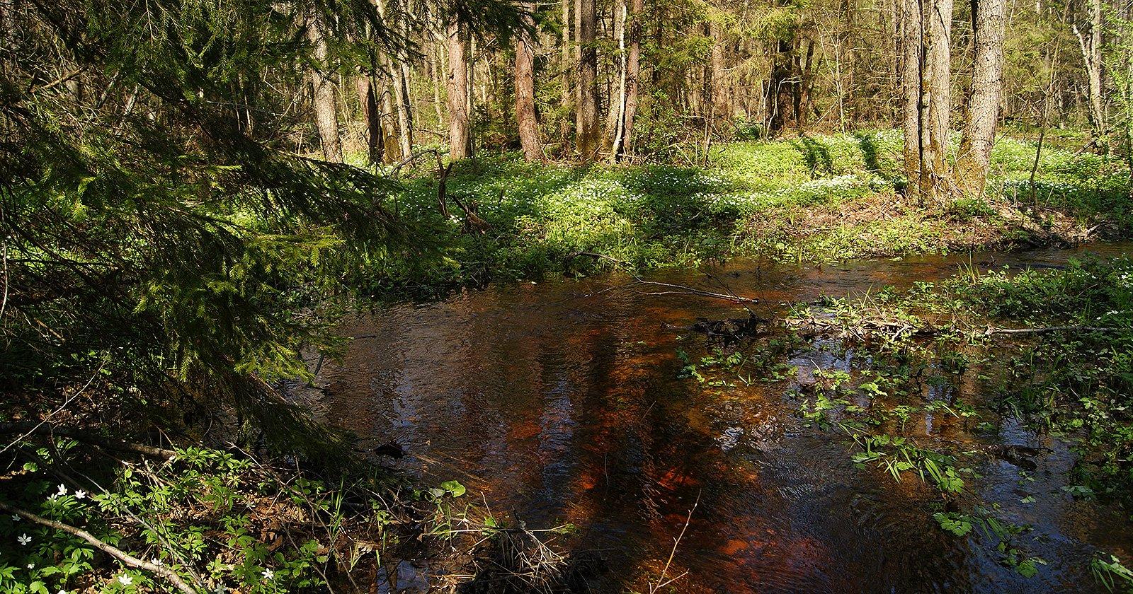 прекрасный ручей