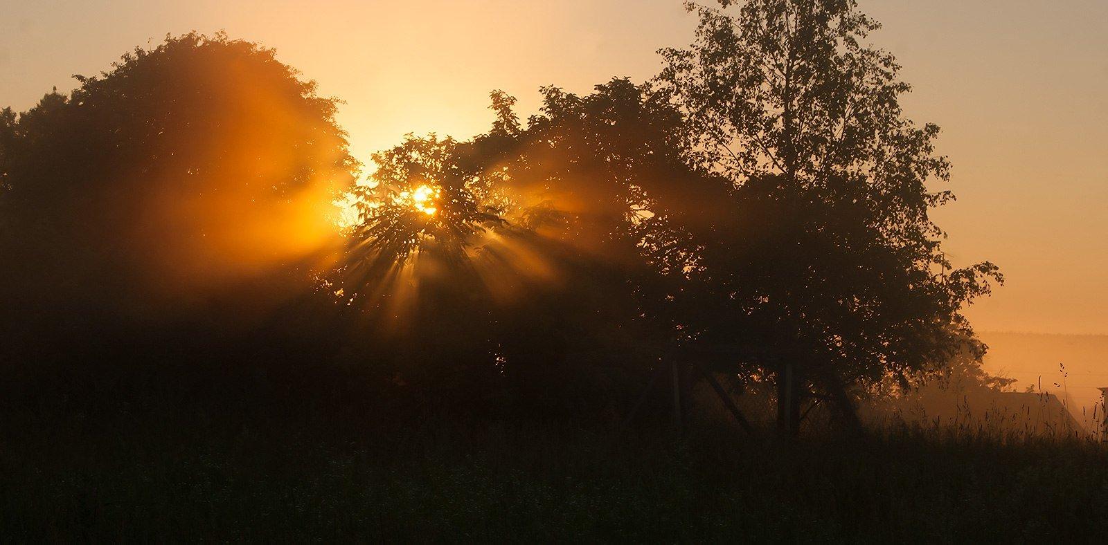 Туман накрыл деревню по верхушки деревьев...
