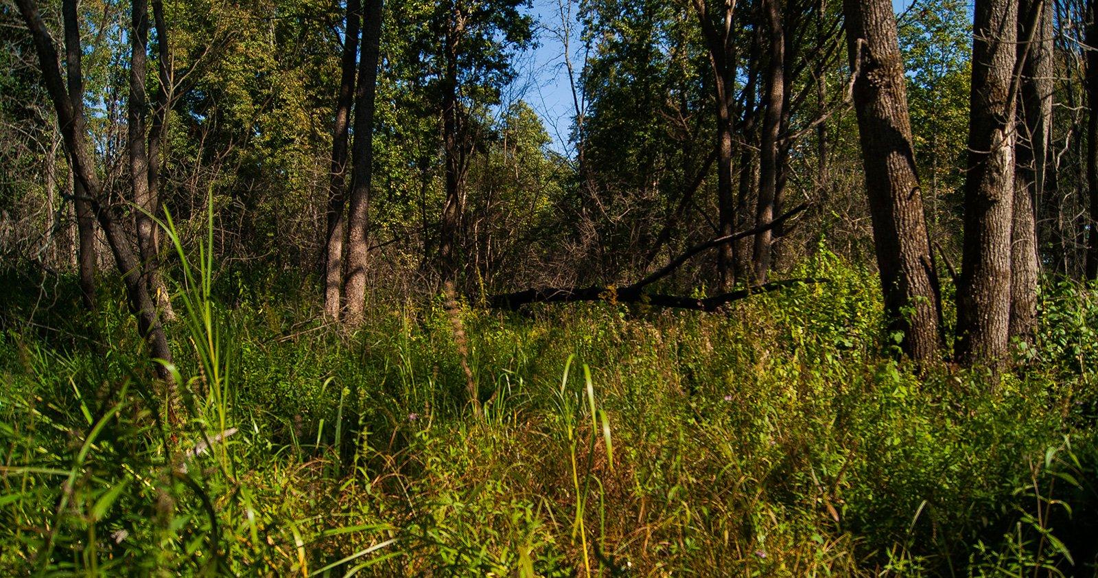 Фотография, конечно, не в полной мере передает, насколько сложно перемещаться по этому лесу