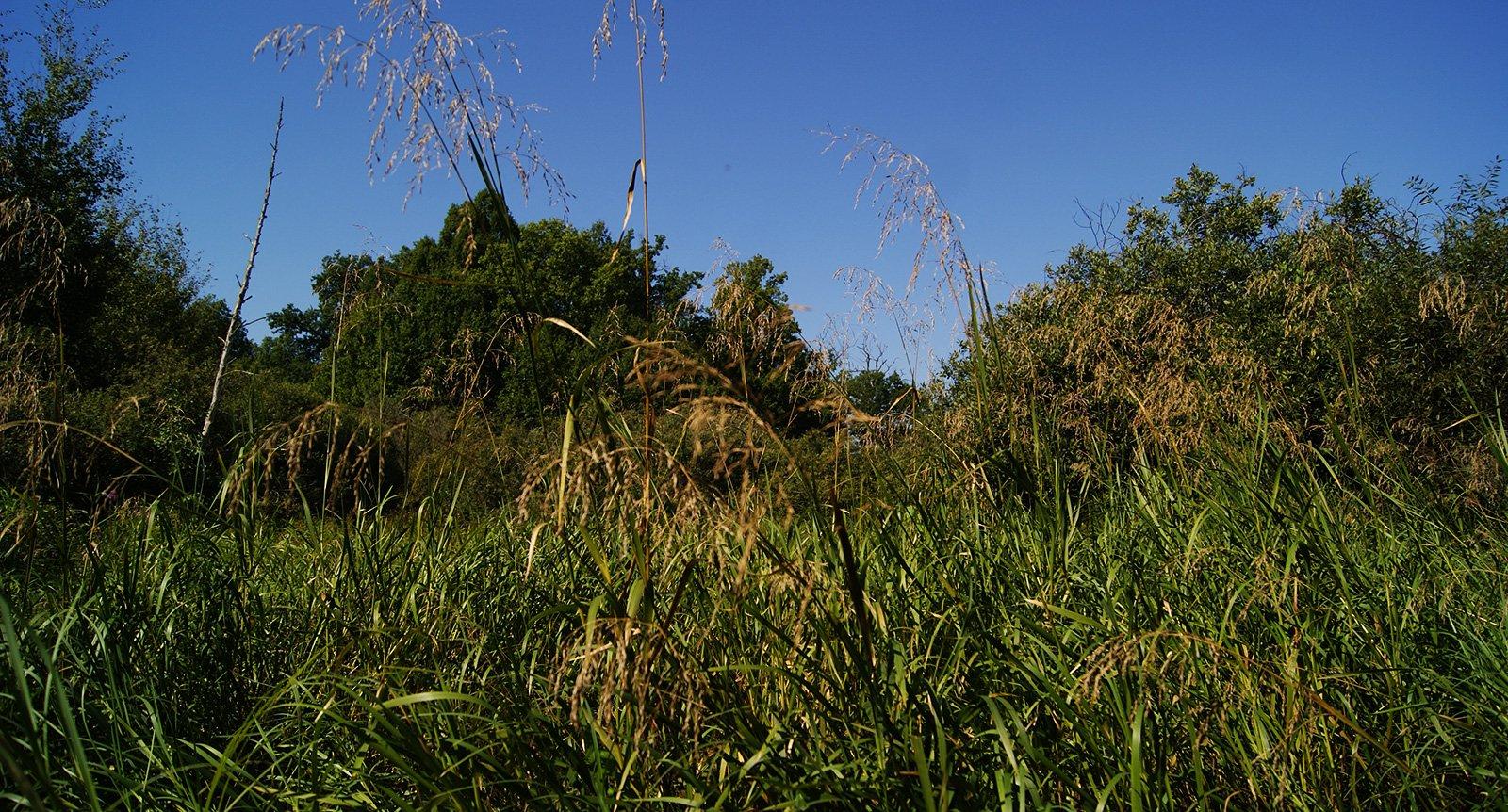 луга заросли травой выше человеческого роста
