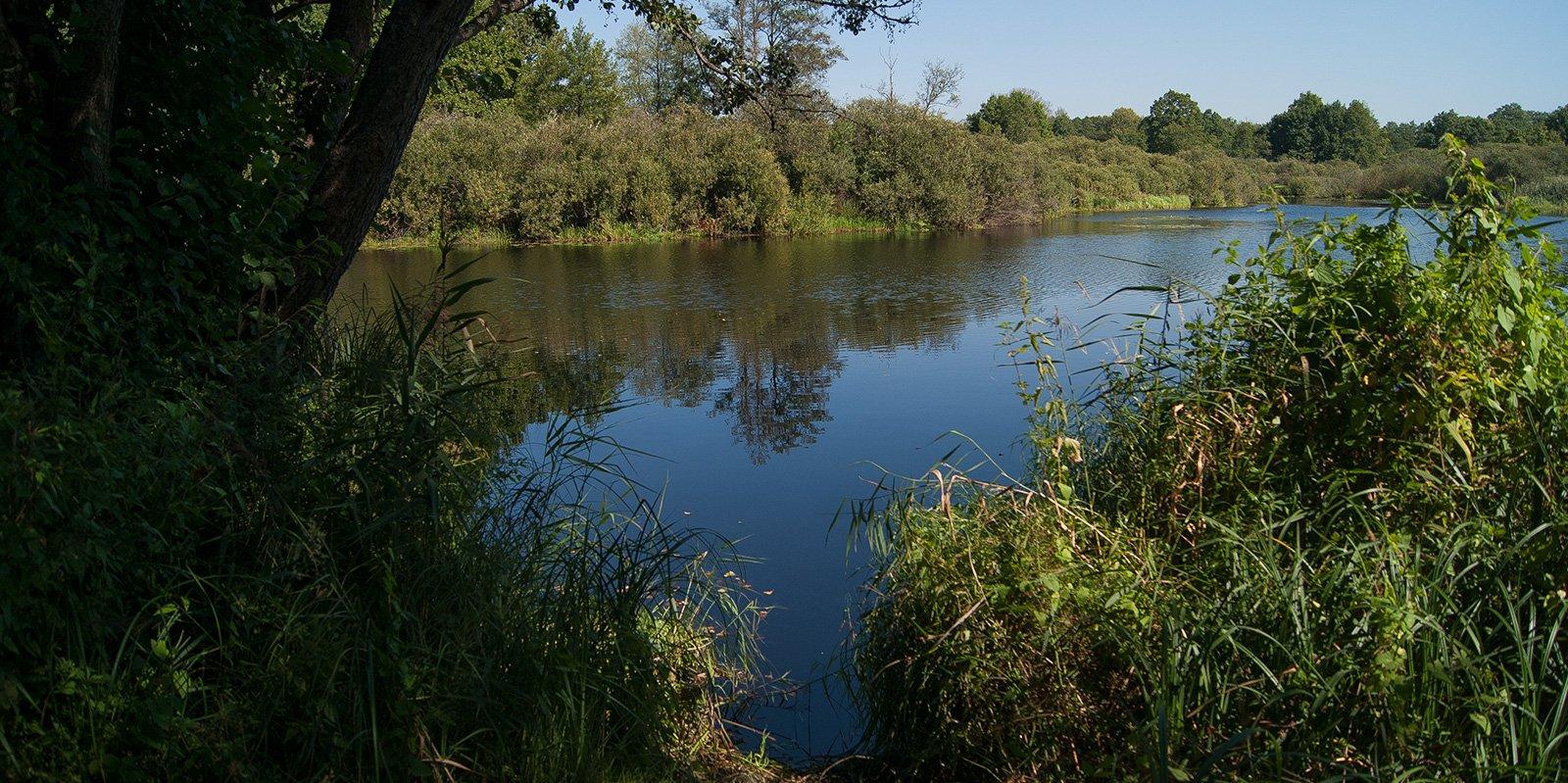 берега озера сильно заросли