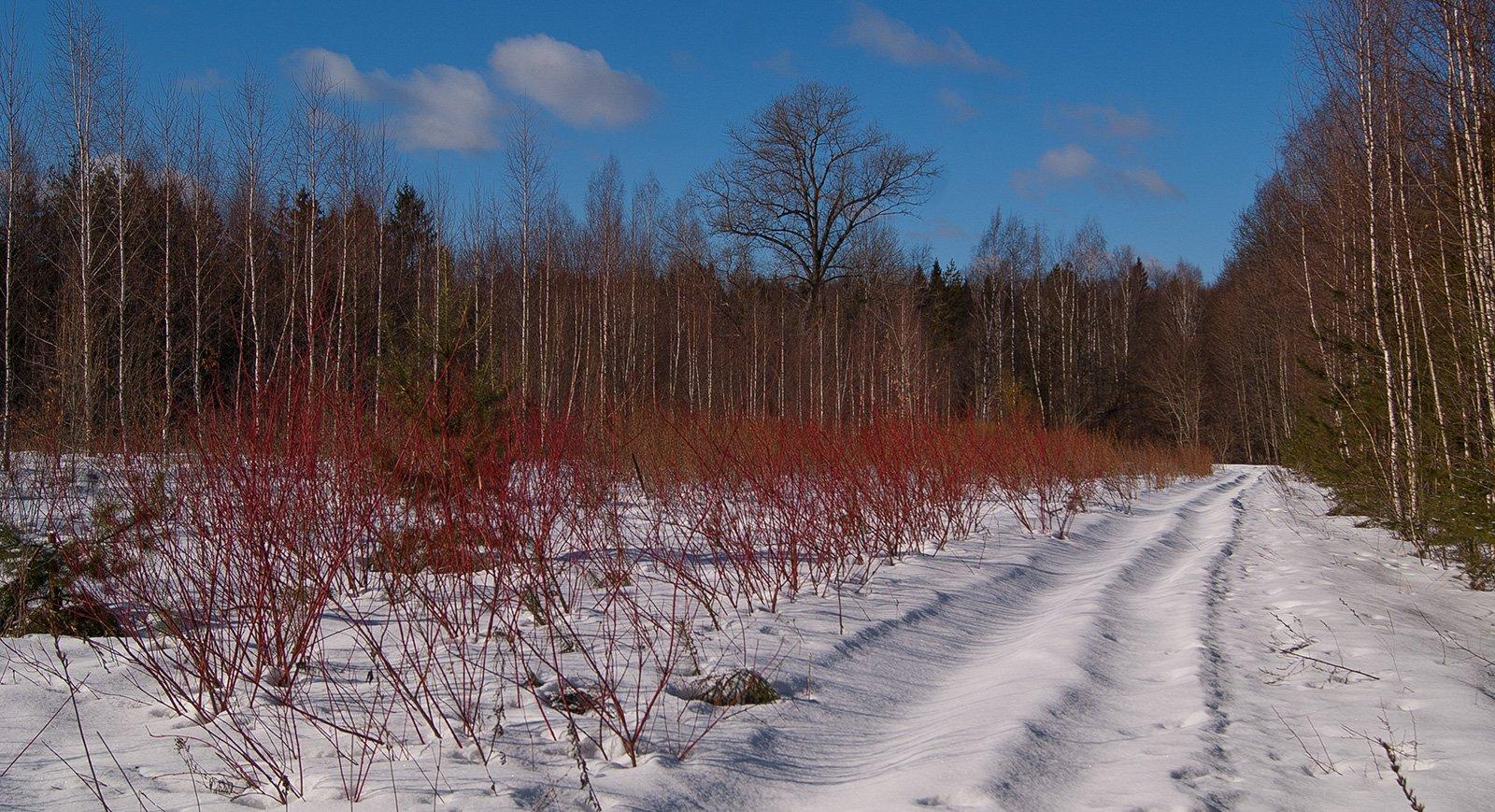Дендрарий Снежетьского лесничества