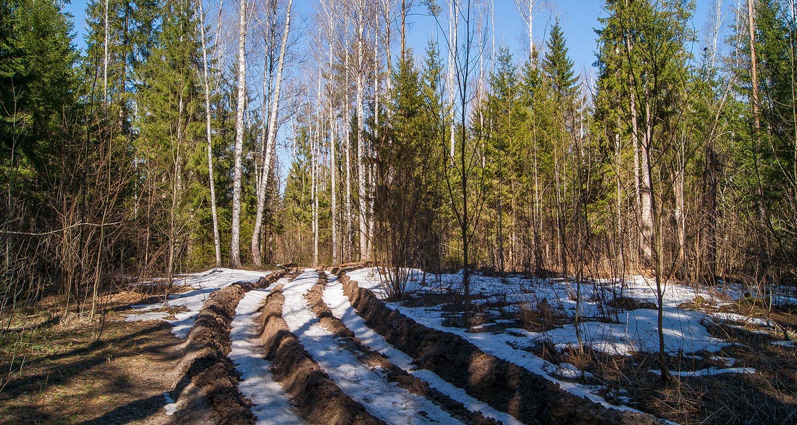 На лесовозных дорогах еще полно снега
