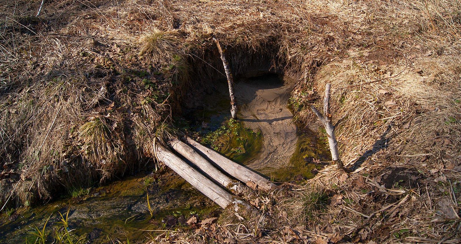 Один из истоков реки Шумоветки. Дебет родника значителен  - песок прямо кипит в струях.
