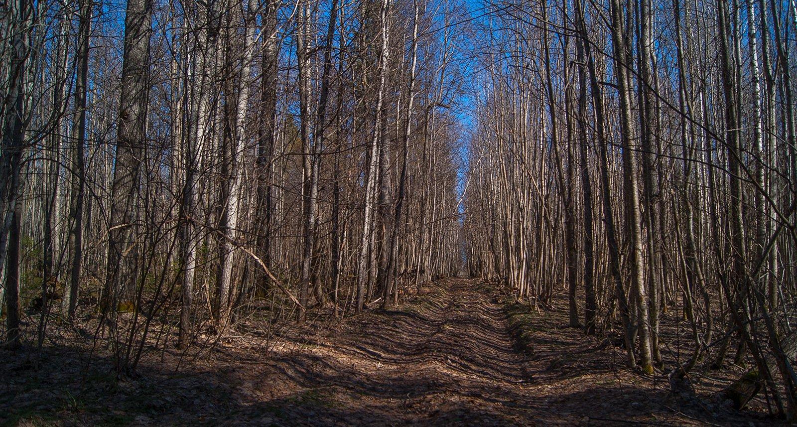 Лесная дорога в урочище Лобан