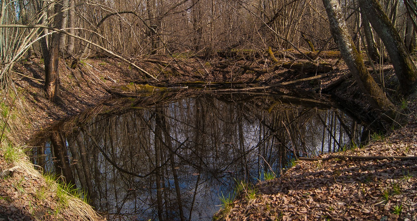 небольшое озерко, когда-то бывшее омутом реки