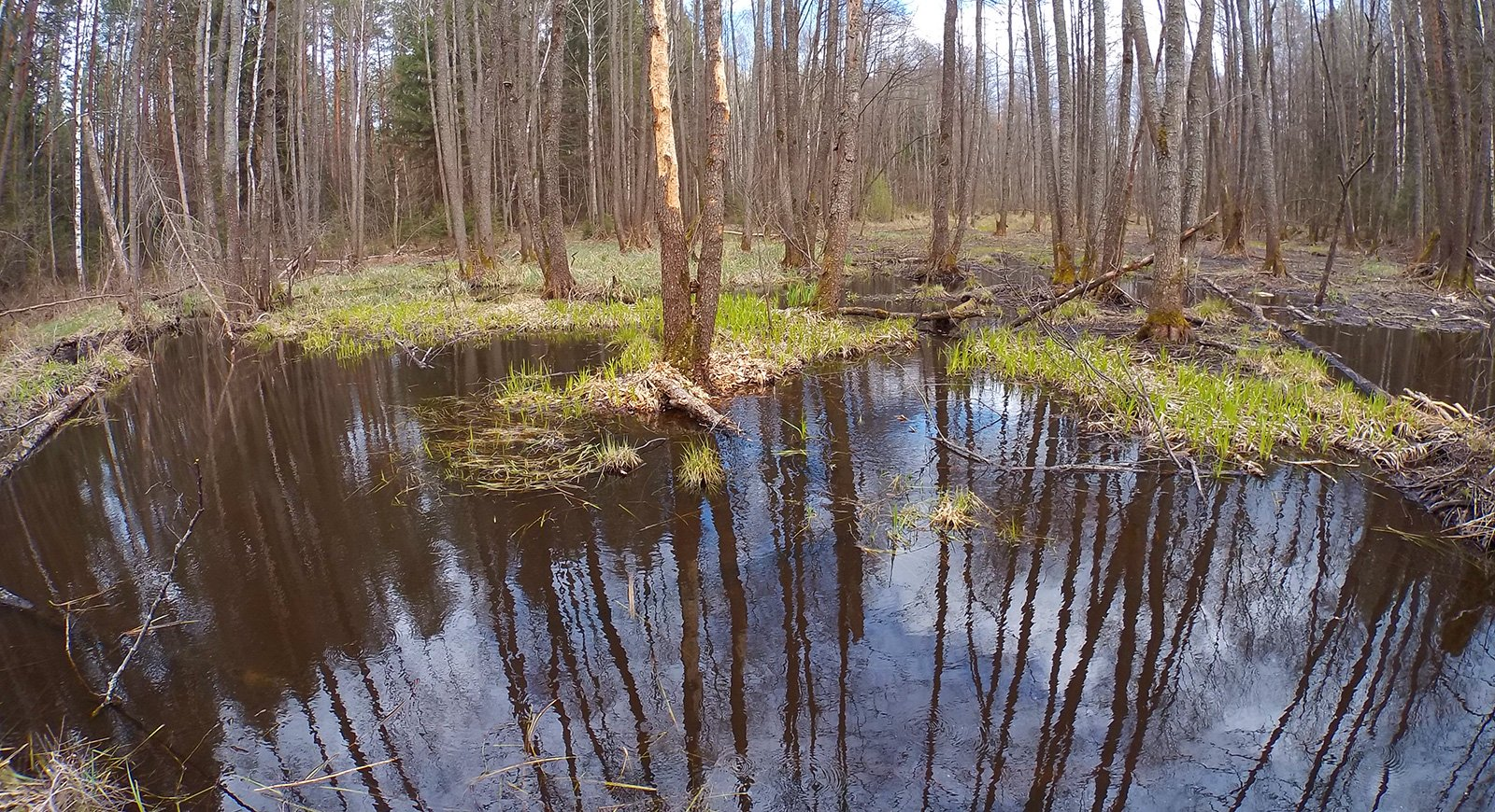 Заболоченный участок в верховьях ручья Путивня