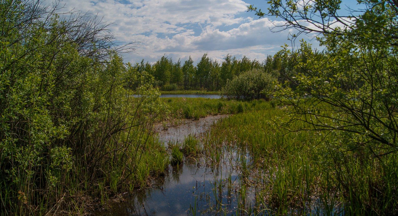 берега у озера Голосок подболочены и подобраться к воде можно лишь по клади...