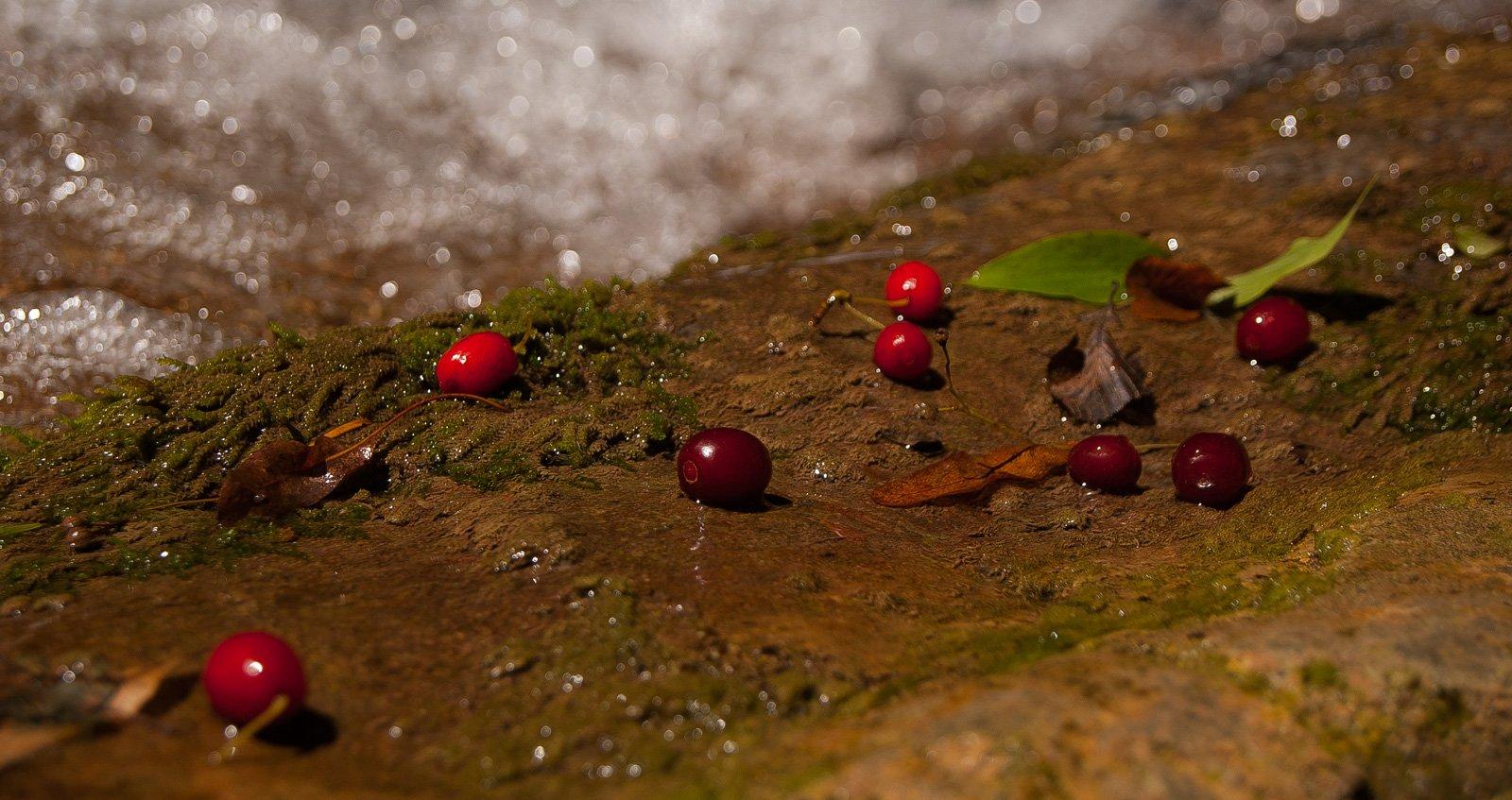 Опавшие плоды кизила на краю потока
