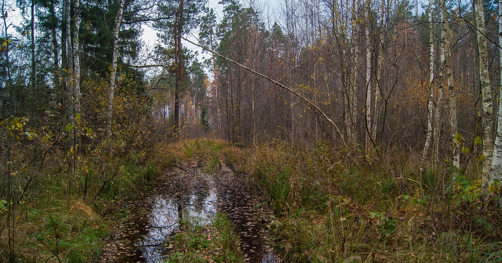 Старая дорога к реке Ловче