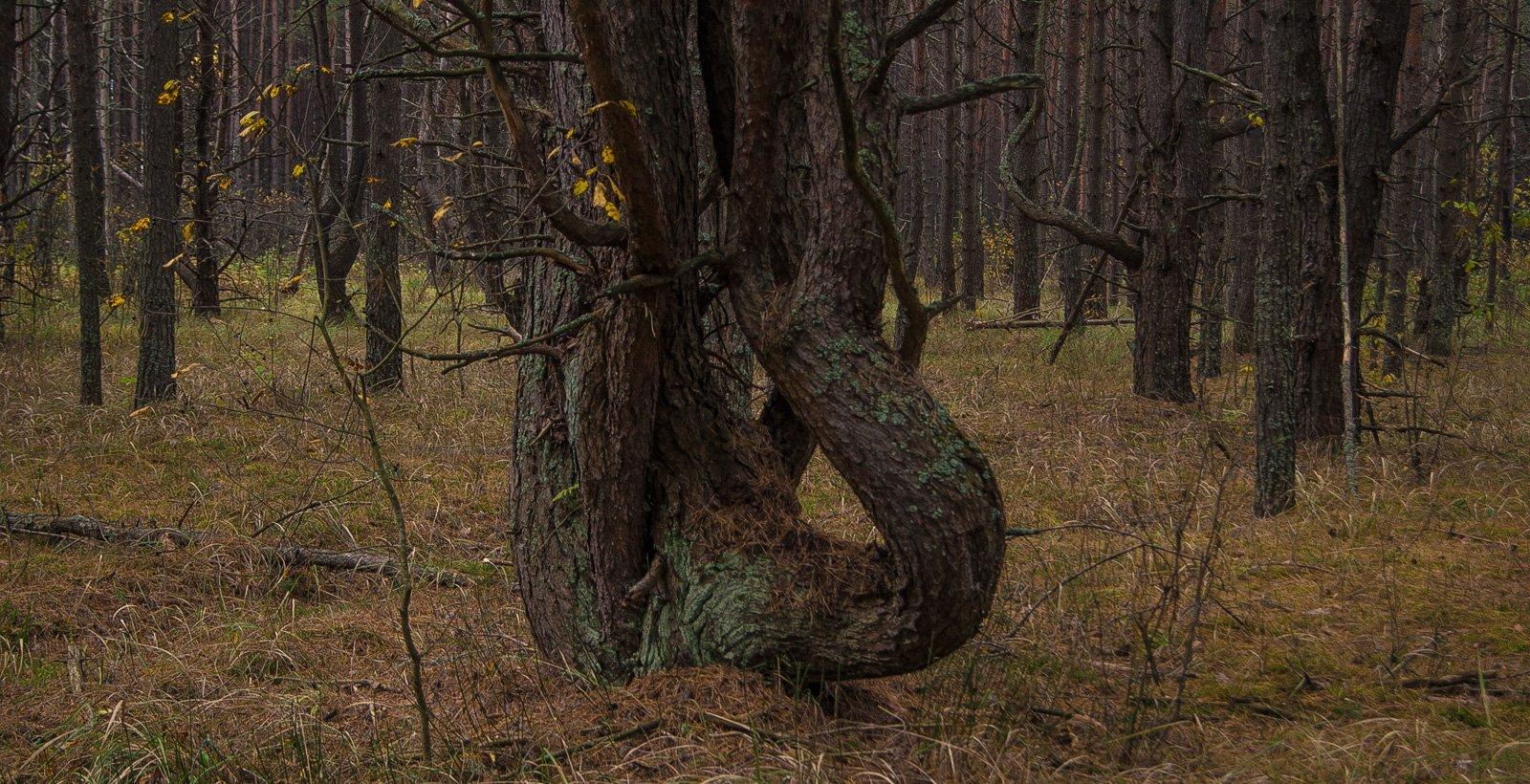 """В """"ведьмином лесу"""""""