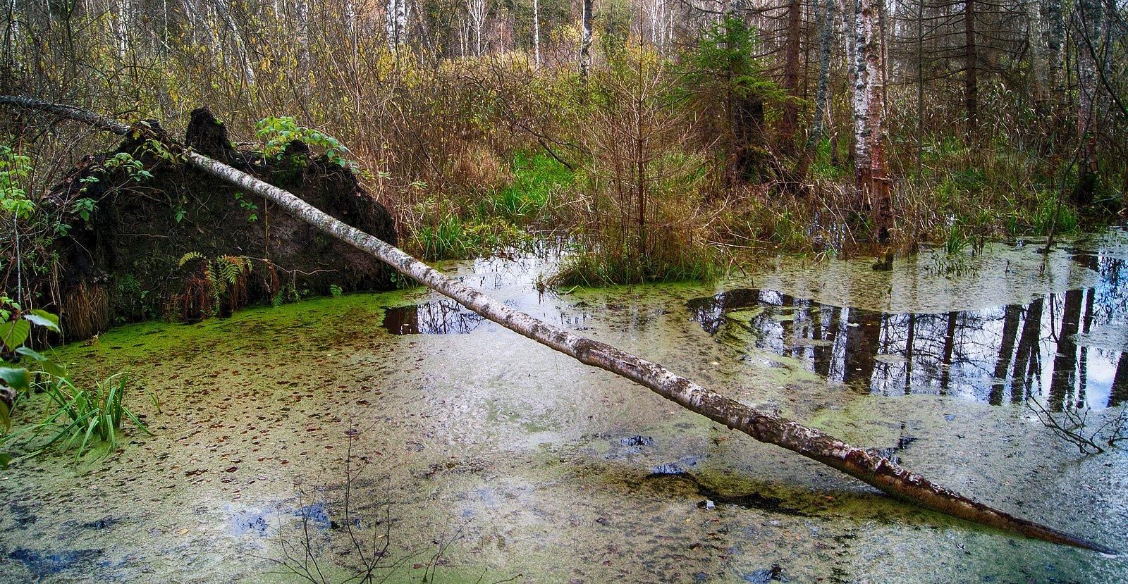 А по виду болота ...