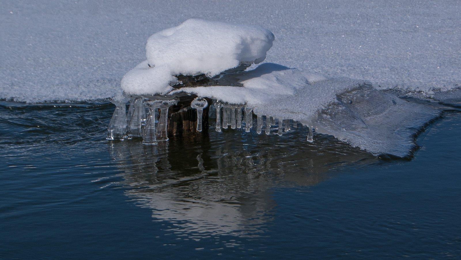 Ледяные колокольчики