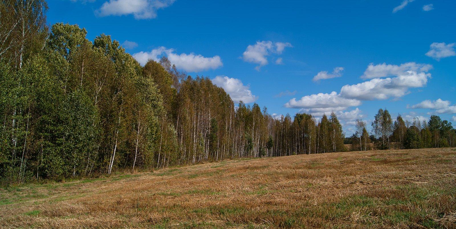 Опушка леса за Упруссами