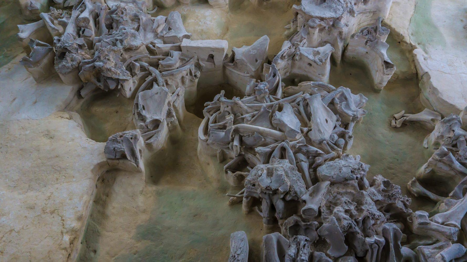 Запасы мамонтятины хранили в холодильных ямах, выкопанных тут же, под боком.