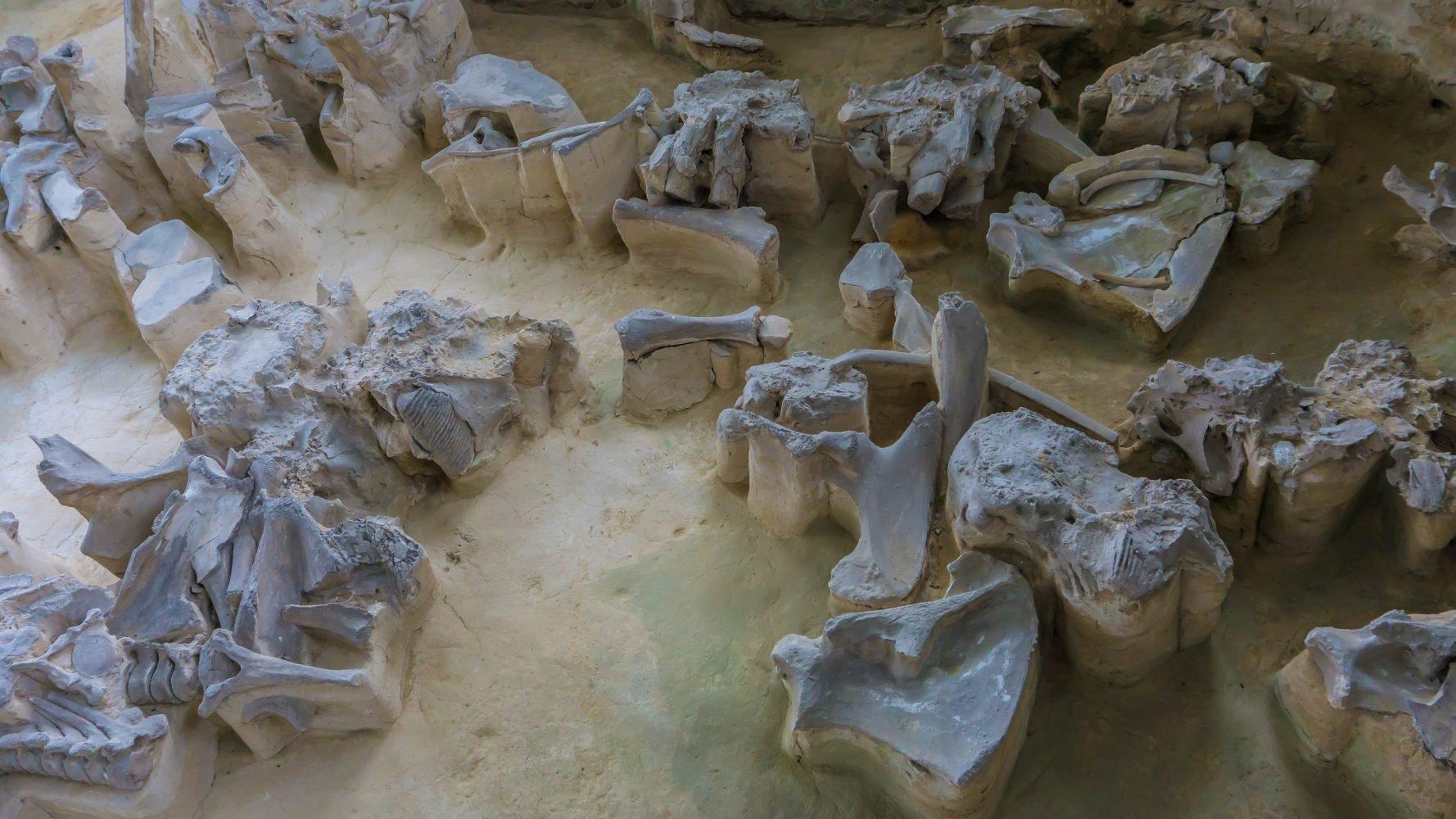 Что любопытно - основным топливом для обогрева и готовки был все тот же мамонт. Дерева в тундре нет, а массивные кости с костным жиром - таки неплохо горят. Пахло, наверное, не очень :-/