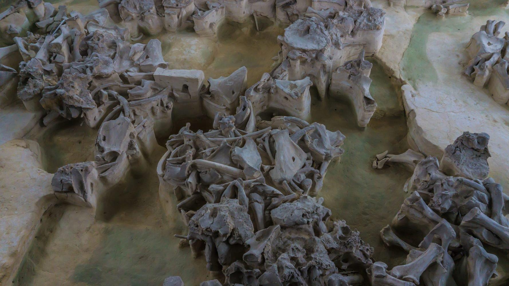 """Жилища - """"яранги""""  строились на фундаменте из черепов мамонтов, стены выкладывались из шкур и костей."""