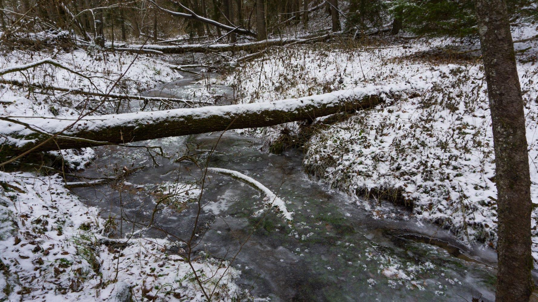 Водопровод не работает, вместо него берем лесной ручей.