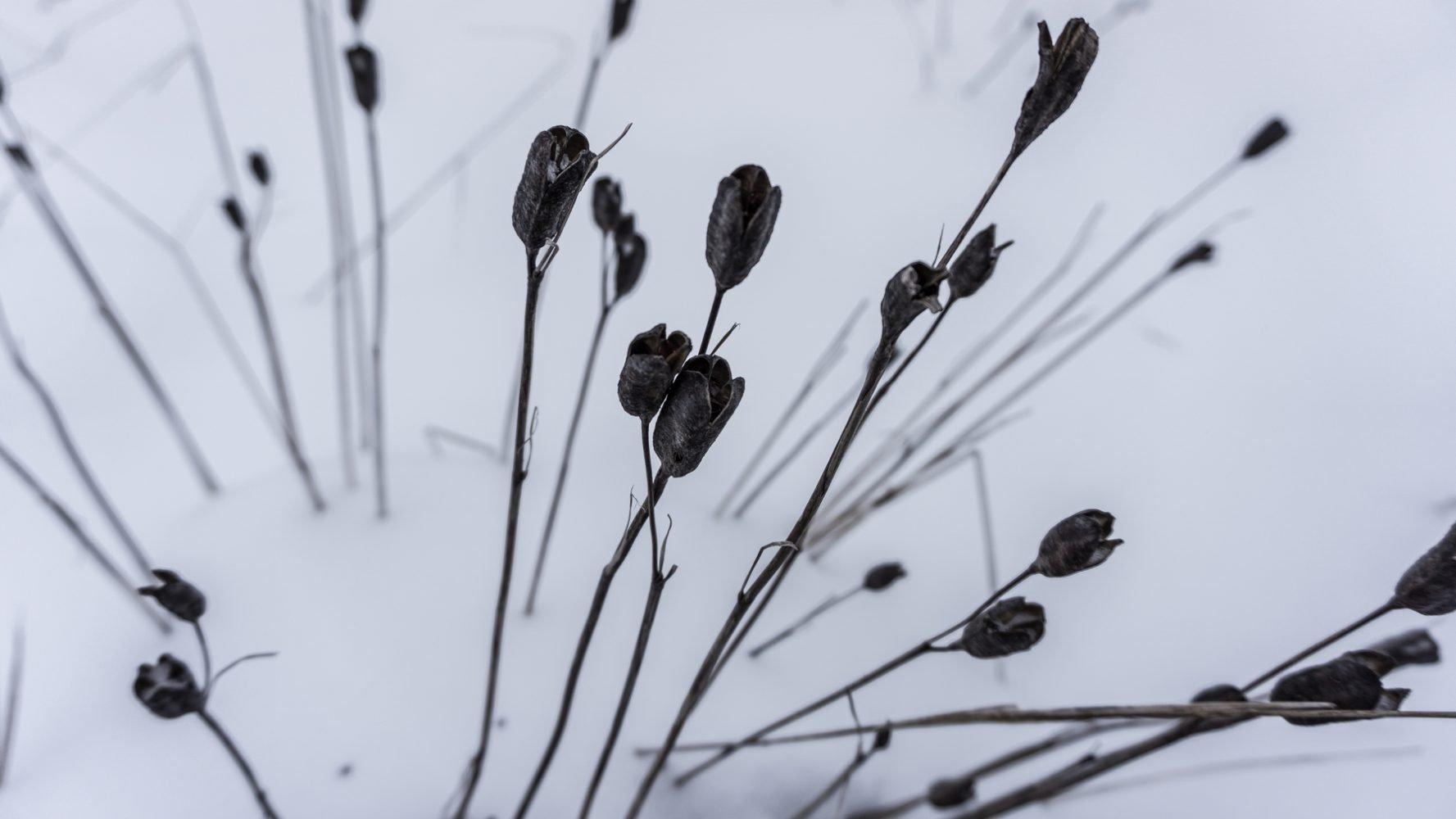 Зимние ирисы, выглядят неожиданно эффектно