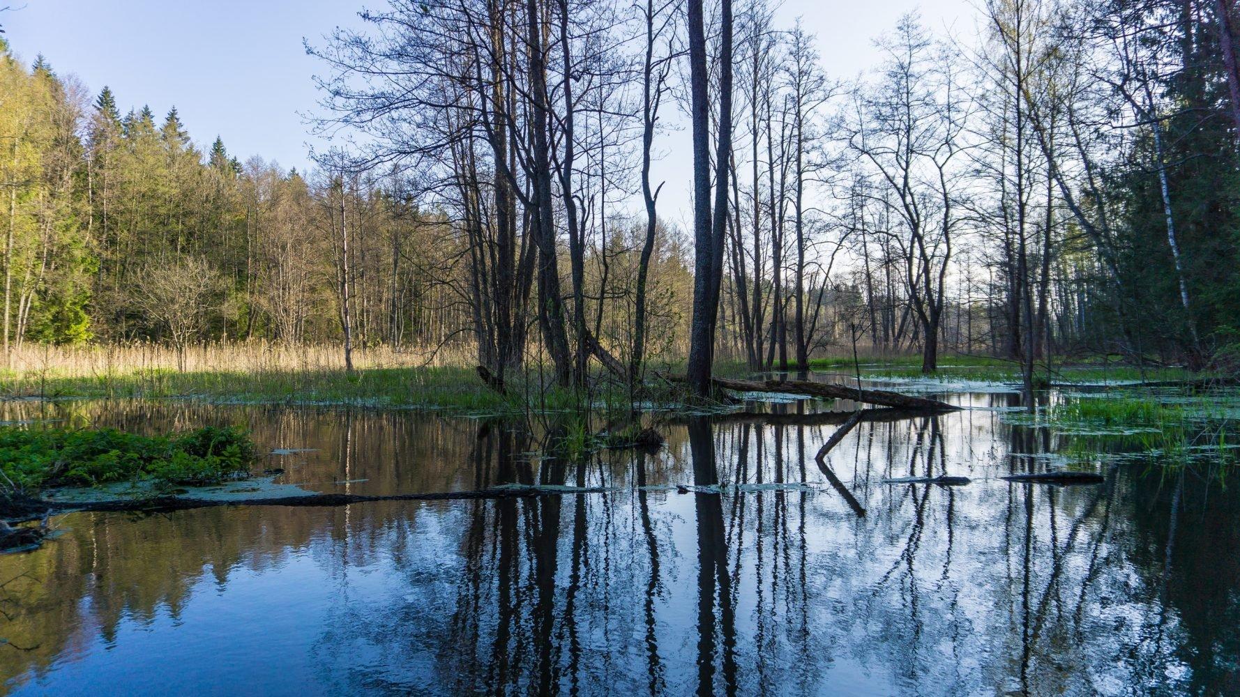 Бобровое озеро