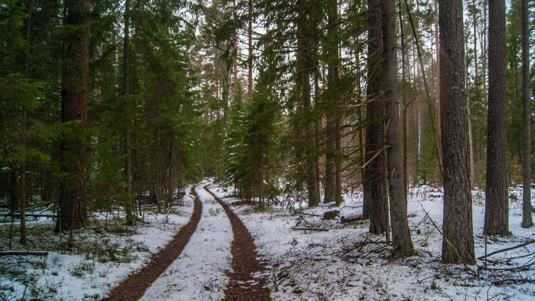 Аккуратная дорожка в ельнике