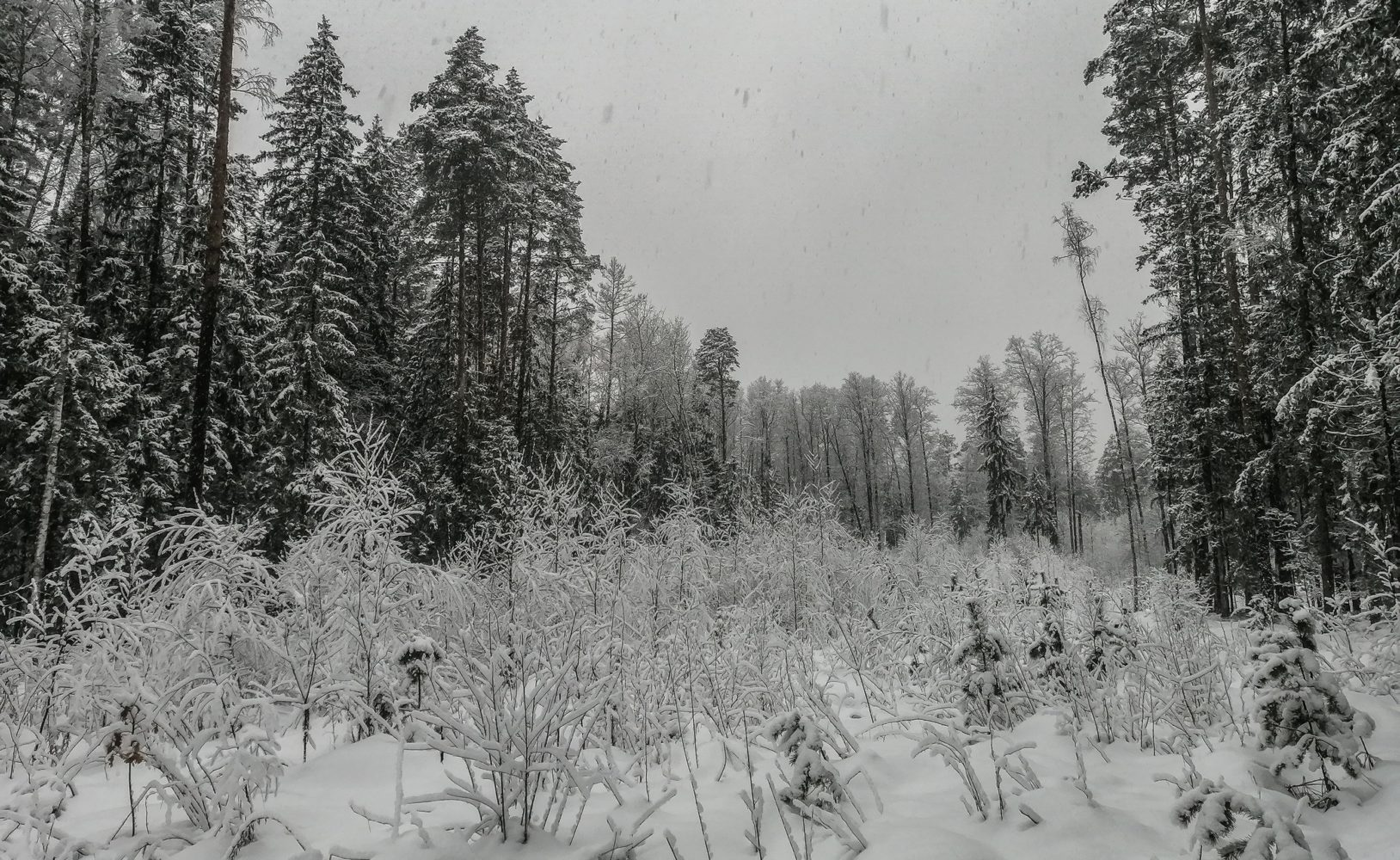 Снежно и тихо