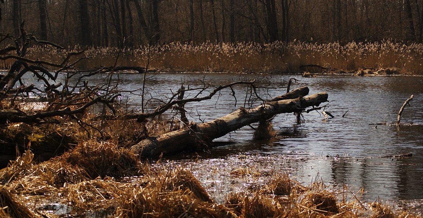 Озеро Желчье