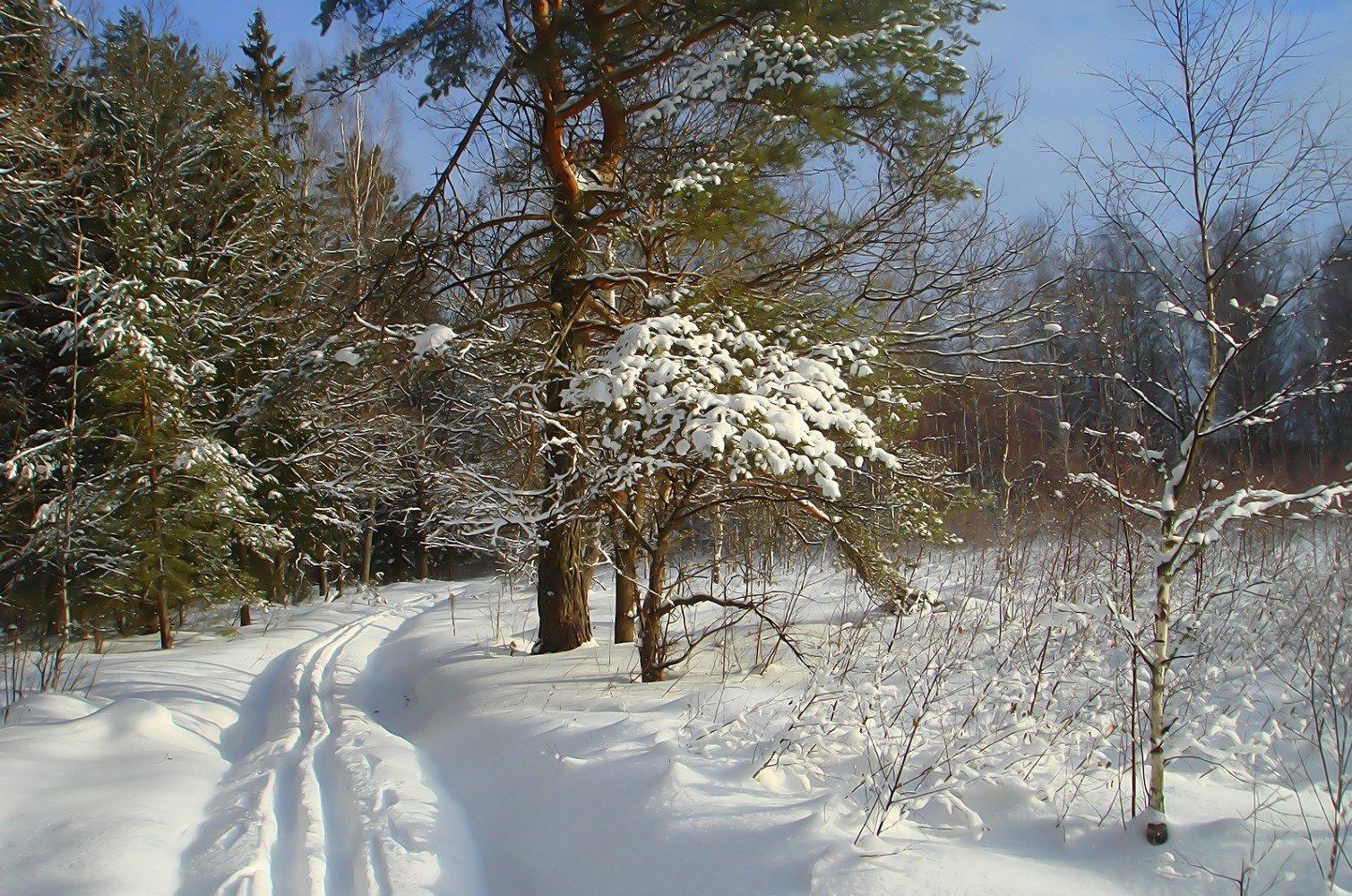 снежные сумерки