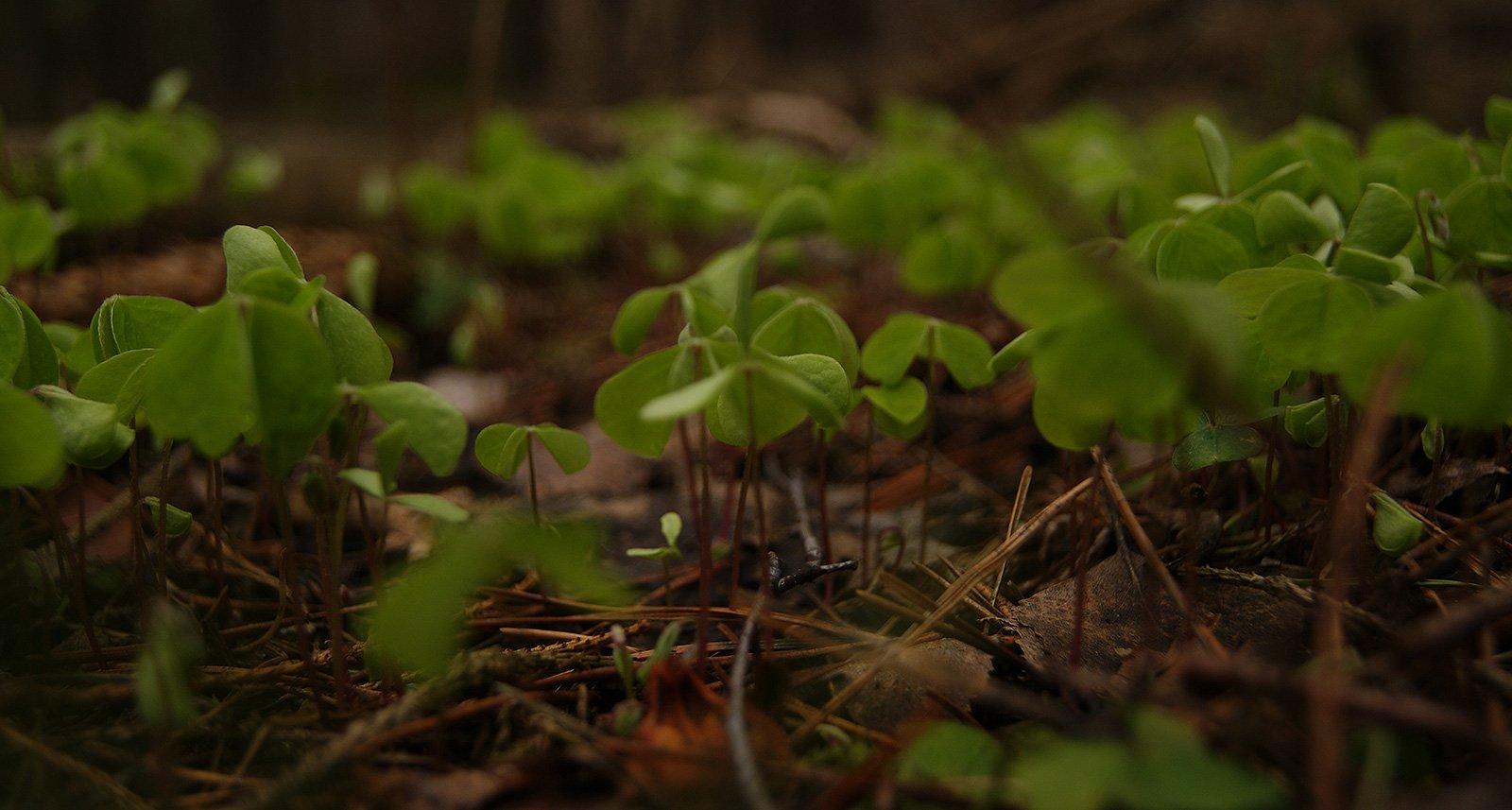мелкие подробности из жизни болотной растительности