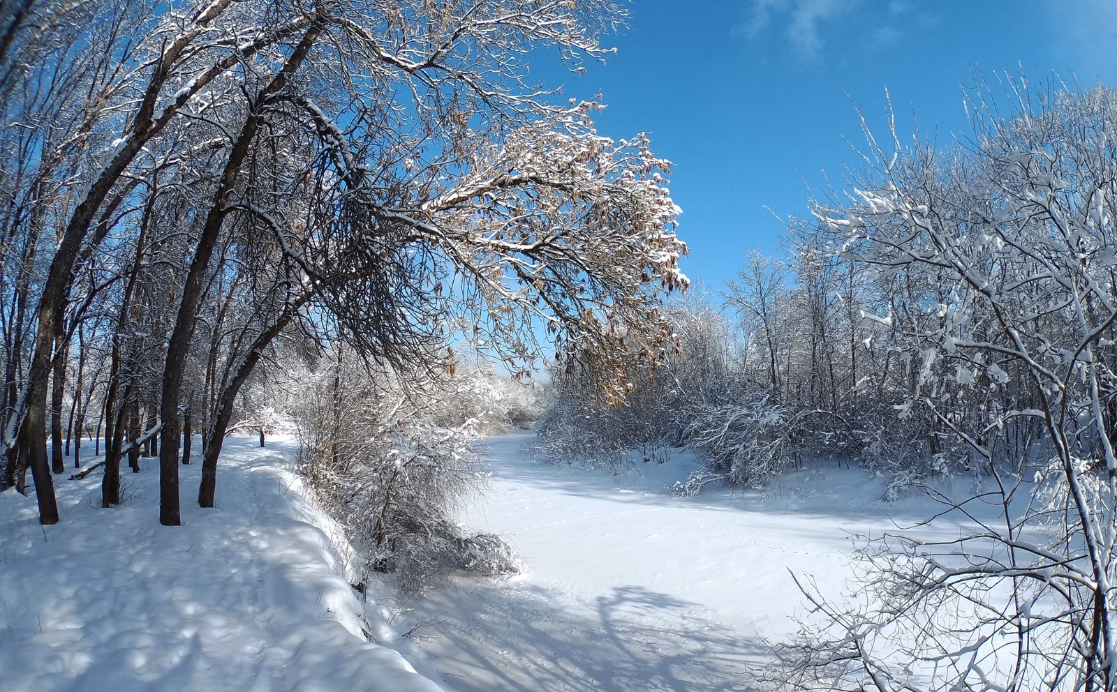 Снежеть в снегу