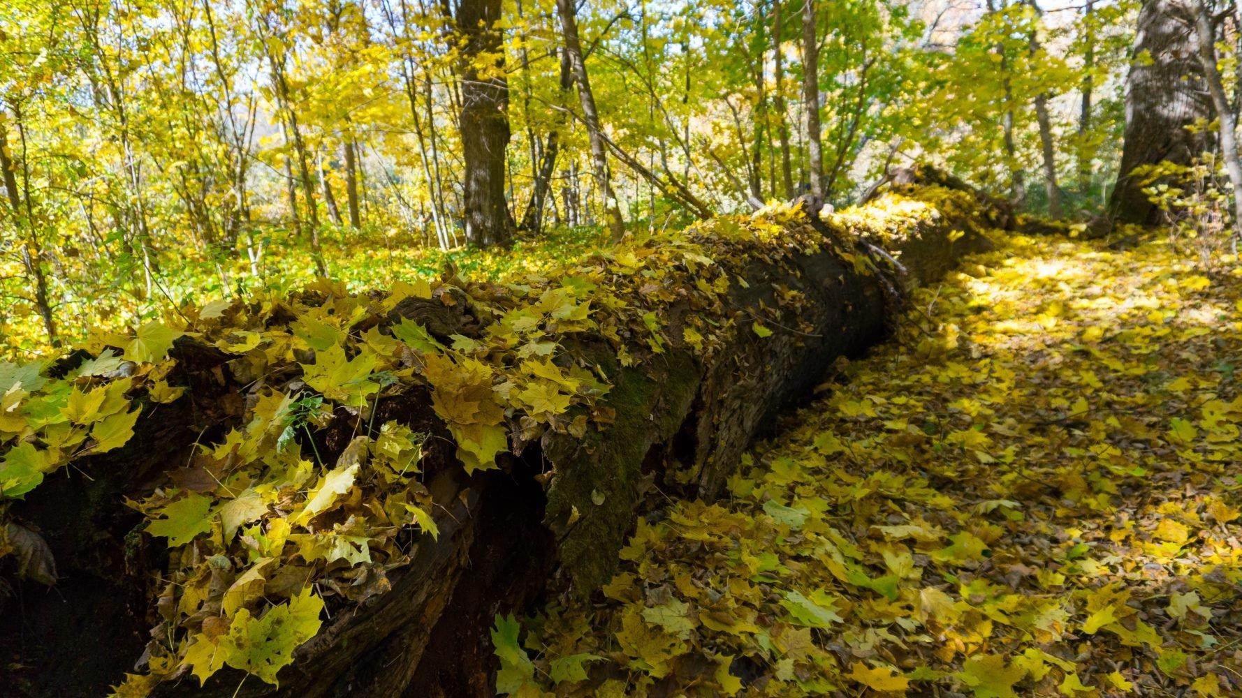 Золотая осень в урочище «Болото Рыжуха»
