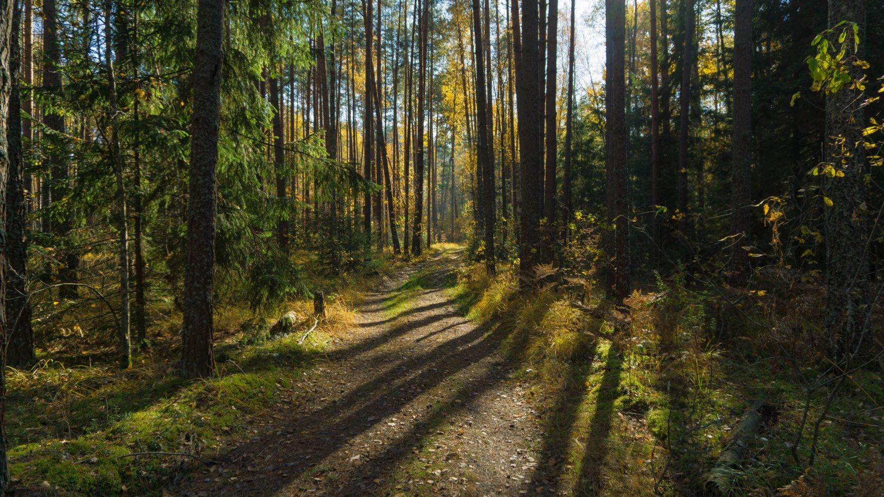 Ковшовский лес в октябре