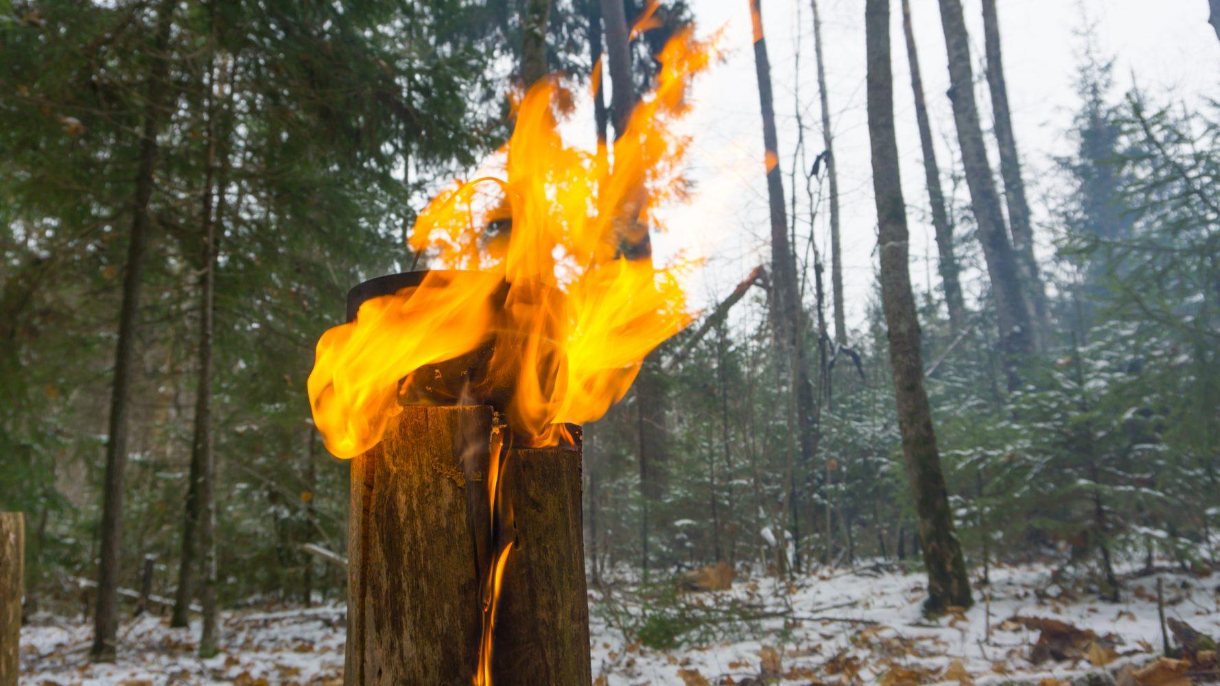 Первый день зимы с лесным чаем — делаем это правильно!