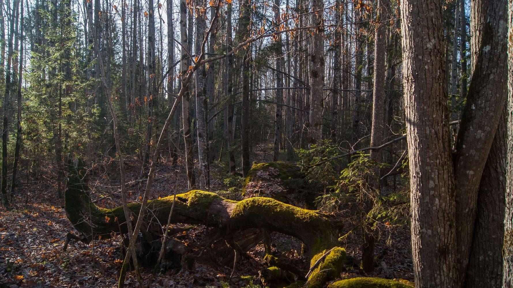 Предзимье на болоте