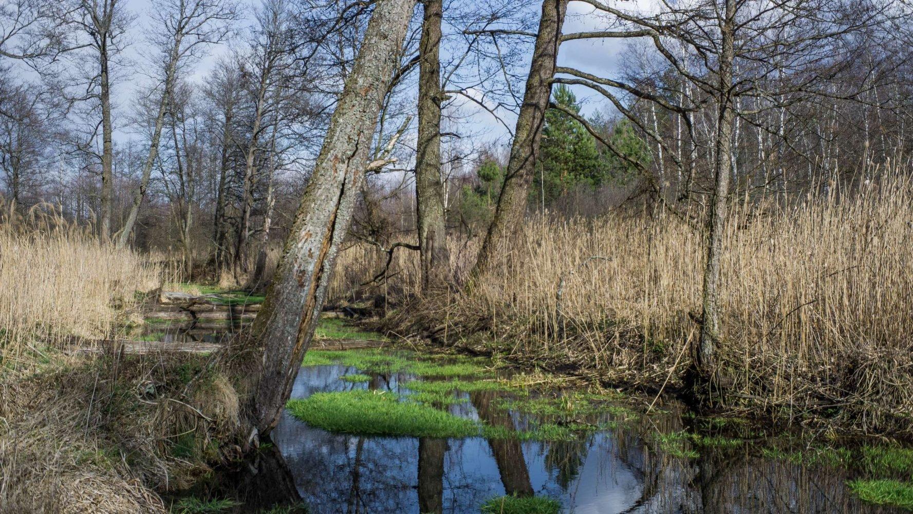 Бобровые ландшафты на реке Железная
