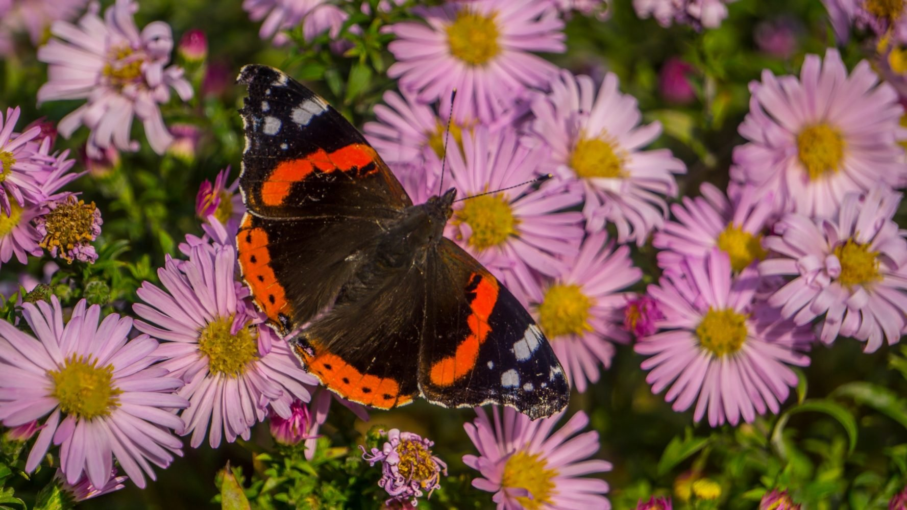 Бабочки — клуб по интересам
