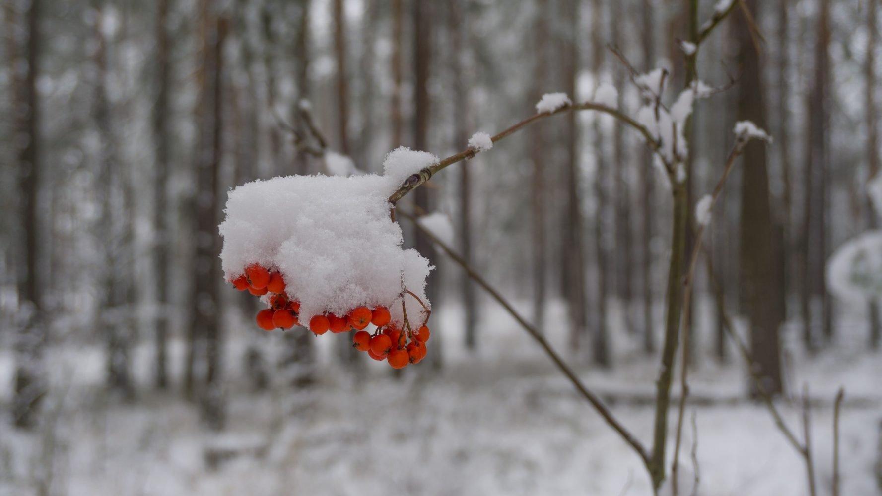 Лёгкий ноябрьский снежок