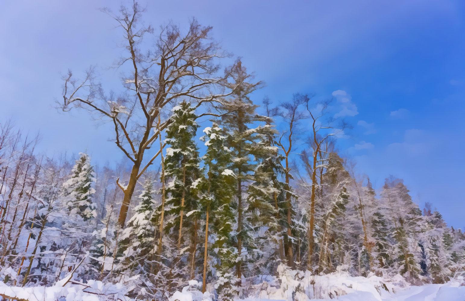 Волшебный зимний лес после сильных снегопадов