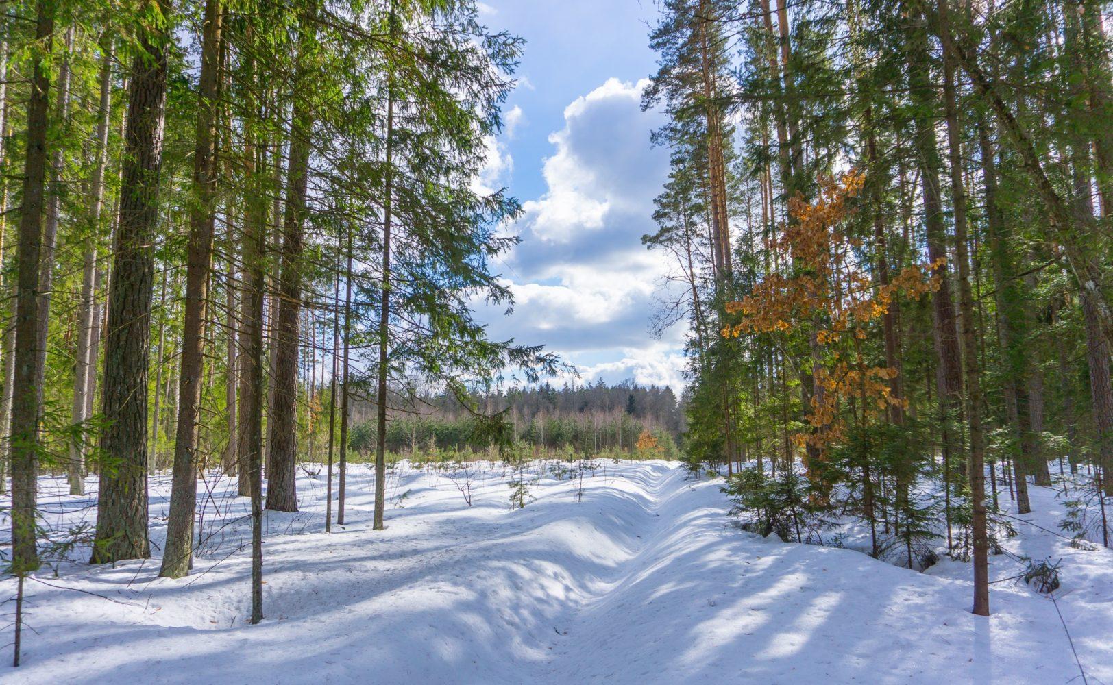 Снежный март на Берёзовке