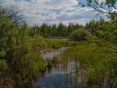 Окрестности озера Бечино