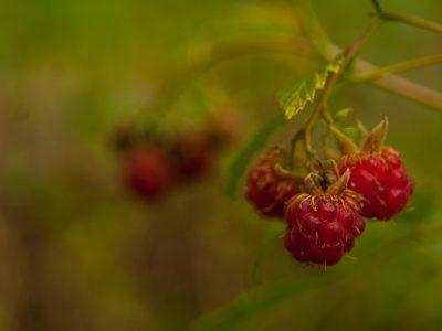 Кусочки лесного июля